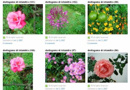 bunga1.jpg