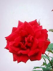 bunga11.jpg