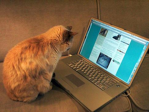 blogging-cat